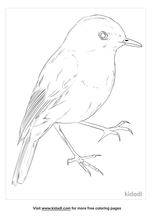 nilgiri-blue-robin-coloring-page