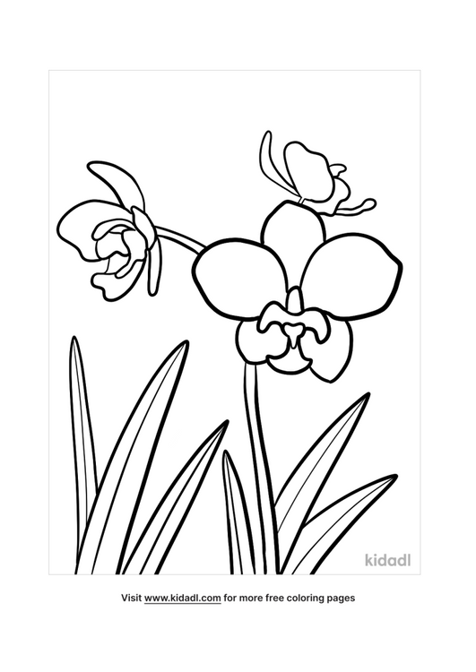 orchid drawing-1-lg.png