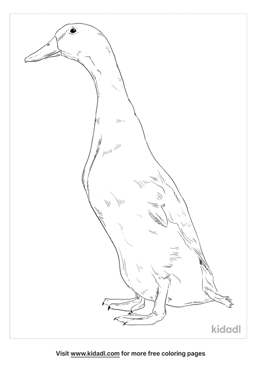 orpington-duck-coloring-page