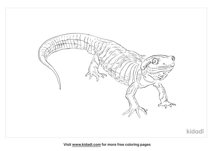 pacific-northwest-salamander-coloring-page