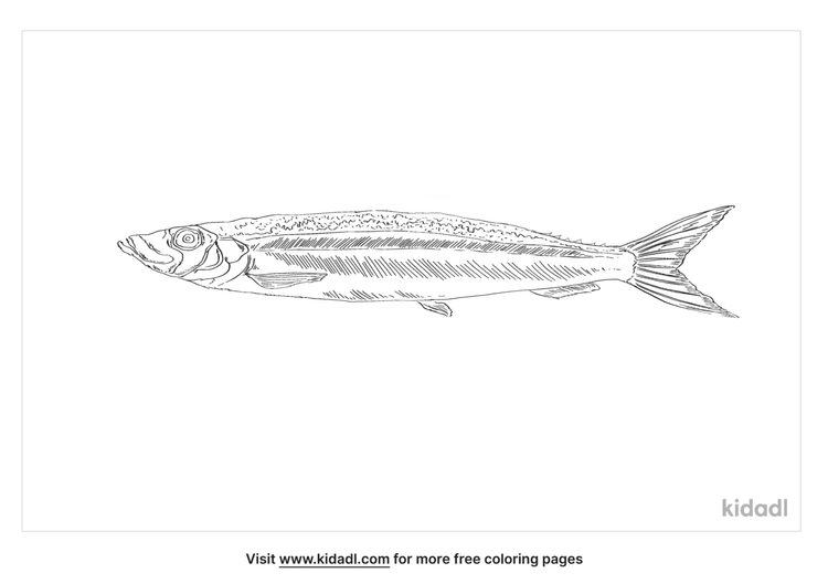 pacific-saury-coloring-page