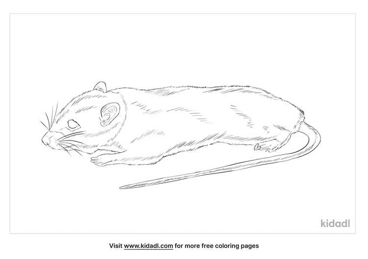 philippine-forest-rat-coloring-page