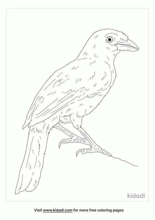 purplish-jay-coloring-page