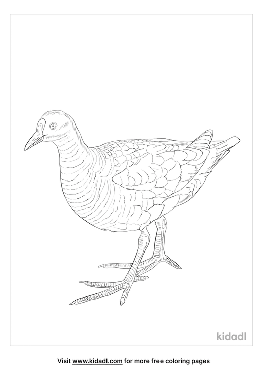 rail-bird-coloring-page