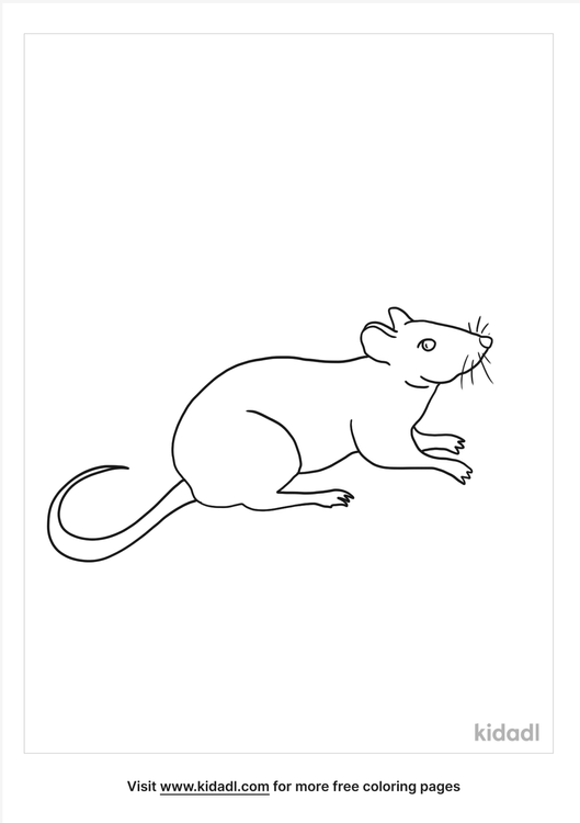 rat-coloring-page.png