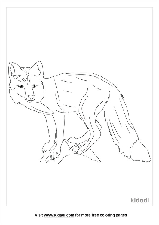 realistic-fox-coloring-page.png