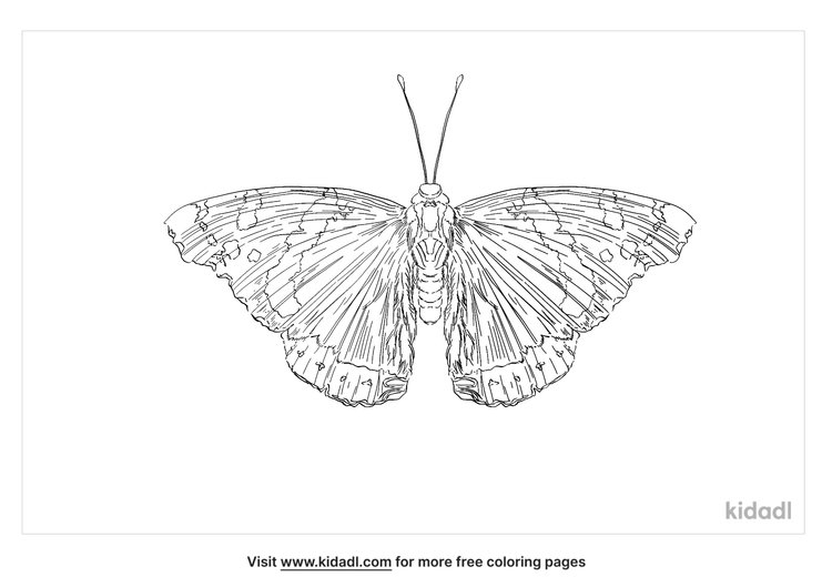 red-admiral-butterfly-coloring-page
