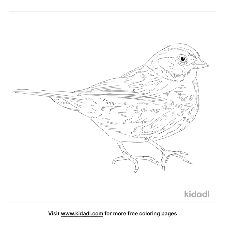 red-fox-sparrow-coloring-page