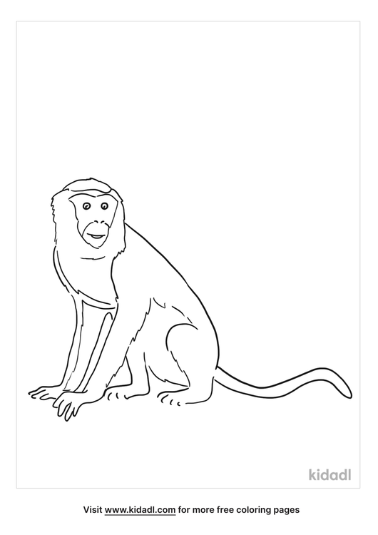 rhesus-macaque-coloring-page.png