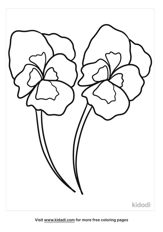 rhode-island-violet-coloring-pages.png