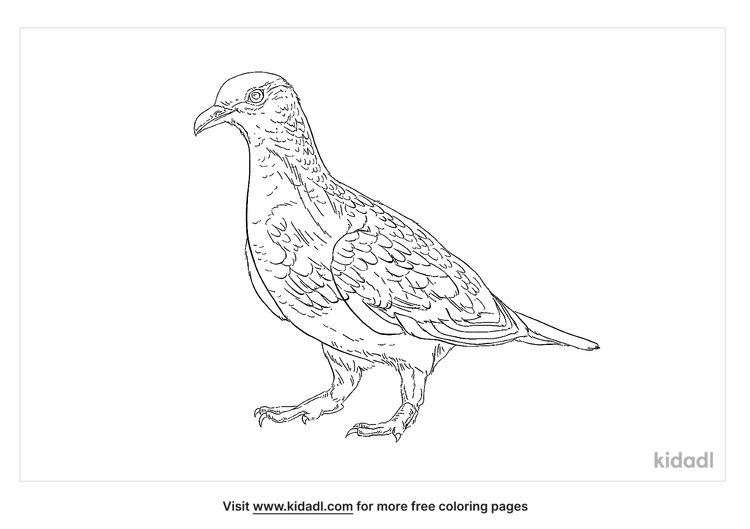 ruddy-ground-dove-coloring-page