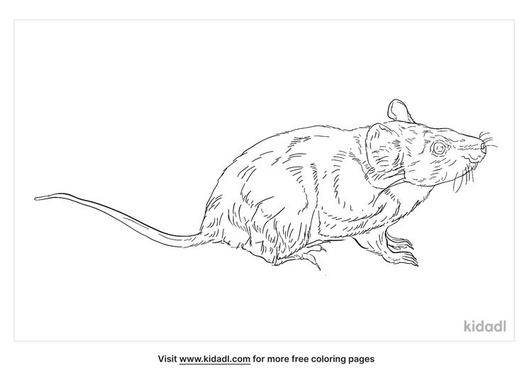 ryukyu-mouse-coloring-page