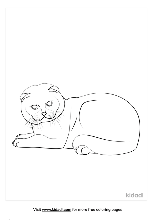 scottish-fold-cat-coloring-page.png