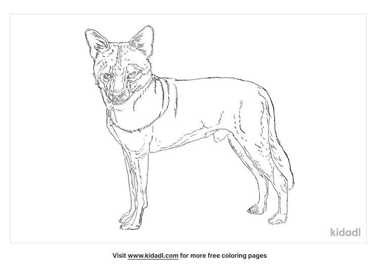 sechuran-fox-coloring-page