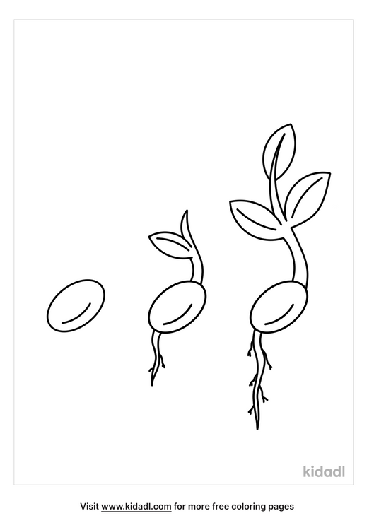 seed-sprouting-coloring-page.png