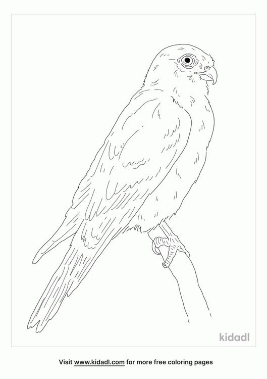 seychelles-kestrel-coloring-page
