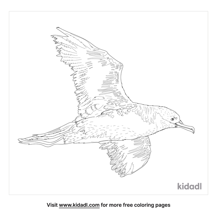 shearwater-coloring-page