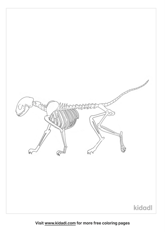 skeleton-cat-coloring-page.png