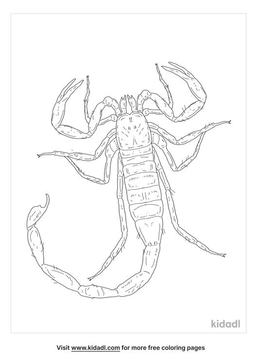 southern-devil-scorpion-coloring-page