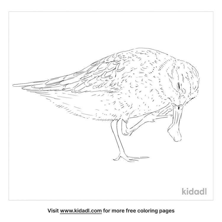 spoon-billed-sandpiper-coloring-page