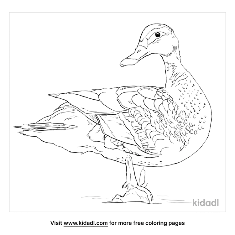 spot-billed-duck-coloring-page
