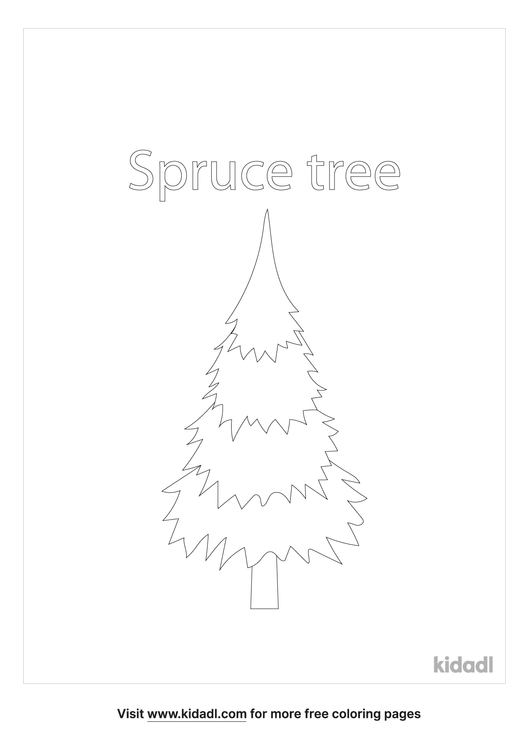 spruce-coloring-page.png