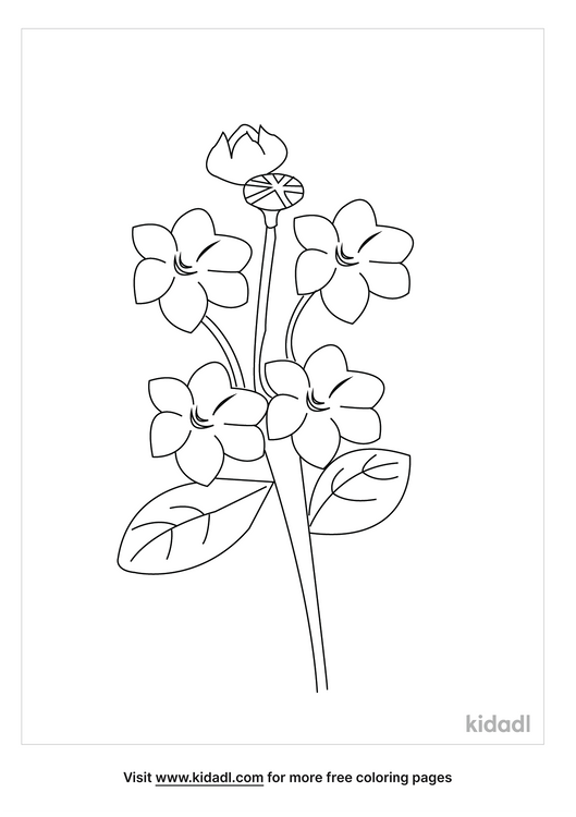 state-flower-of-pennsylvania-coloring-page.png