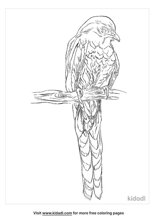 surucua-trogon-coloring-page