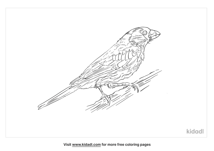 toucan-barbet-coloring-page