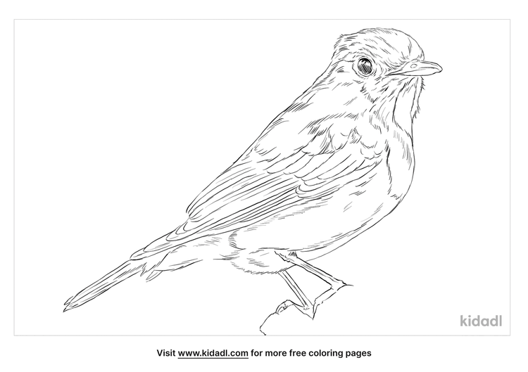 ultramarine-flycatcher-coloring-page