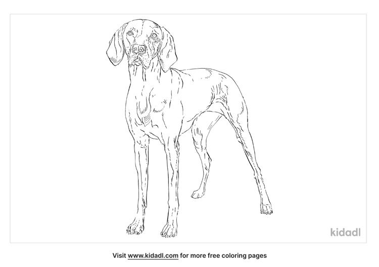 vizsla-coloring-page