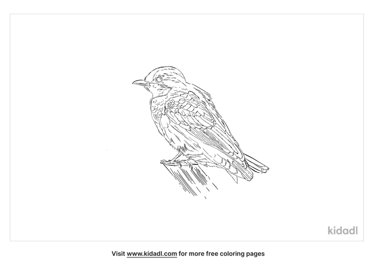 warbler-coloring-page