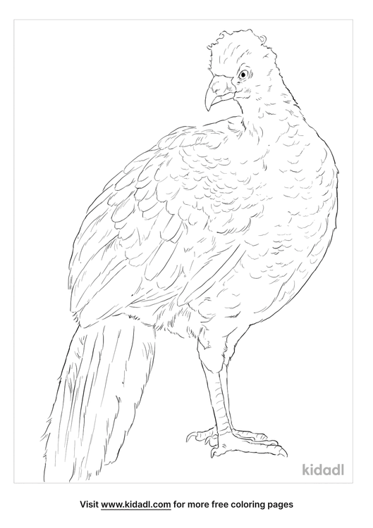 wattled-curassow-coloring-page