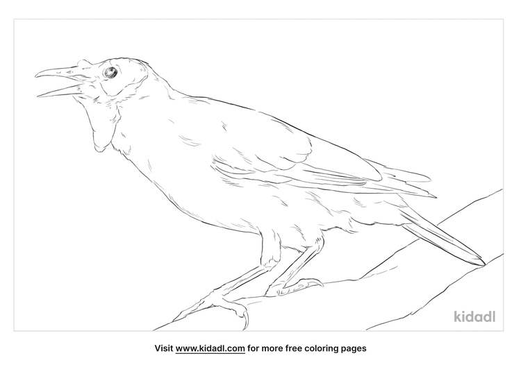 wattled-starling-coloring-page