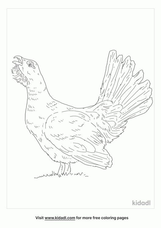 western-capercaillie-coloring-page