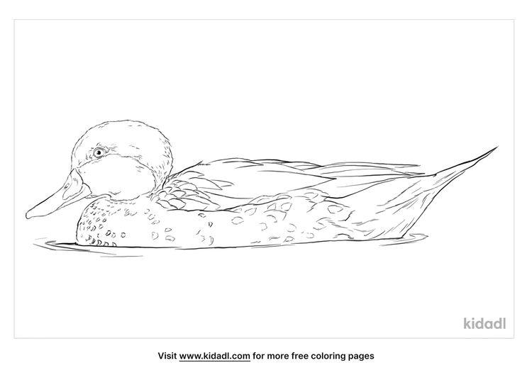 white-cheeked-pintail-coloring-page