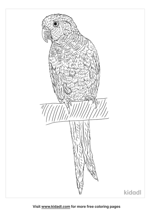 white-eared-conure-coloring-page