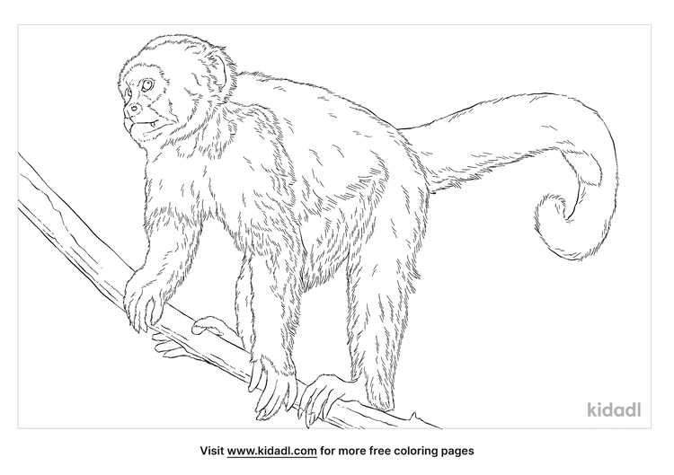 white-fronted-capuchin-coloring-page