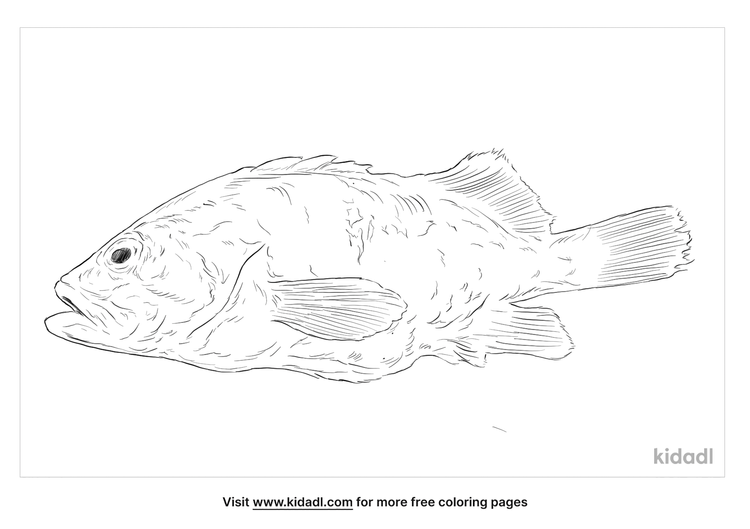 white-grouper-coloring-page