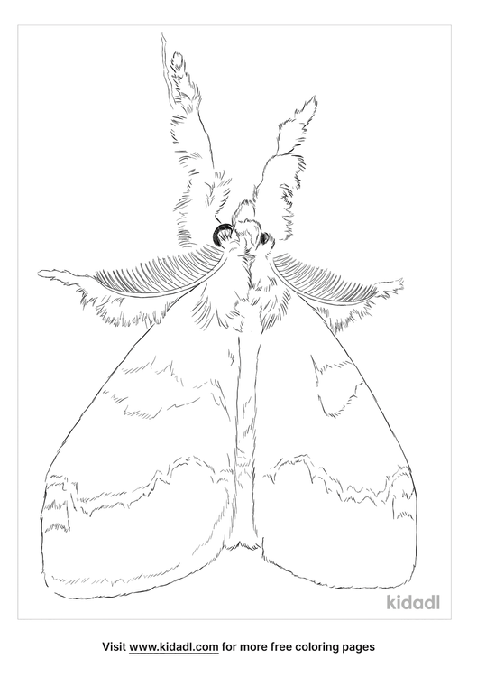 white-marked-tussock-moth-coloring-page