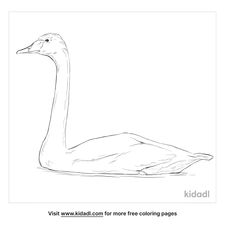 whooper-swan-coloring-page