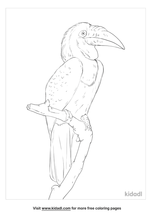 wreathed-hornbill-coloring-page