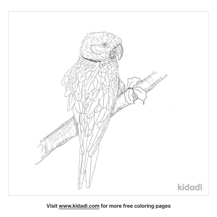 yellow-eared-parrot-coloring-page