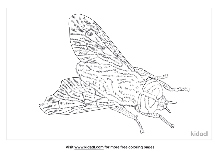 yellow-fly-coloring-page-1-1