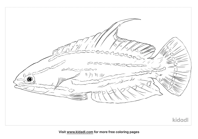 yellowfin-flasher-wrasse-coloring-page