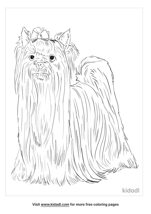 yorkshire-terrier-coloring-page