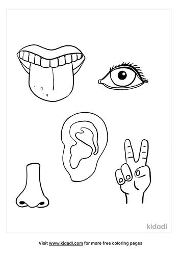 5 senses coloring page_2_lg.png