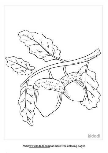 Acorn coloring page-2-lg.png