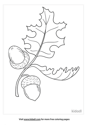 Acorn coloring page-4-lg.png