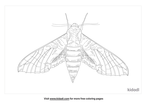 achemon-sphinx-moth-coloring-page